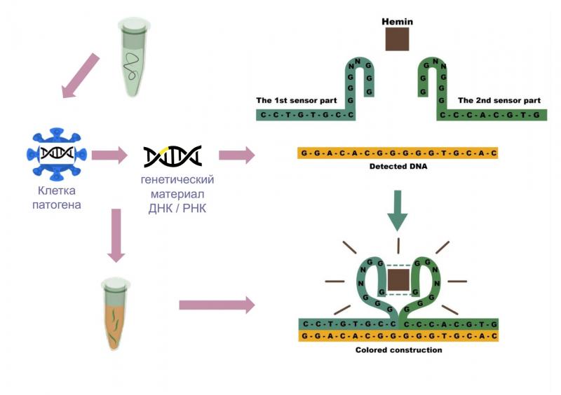 Создание ДНК-наносенсоров. Иллюстрация из презентации