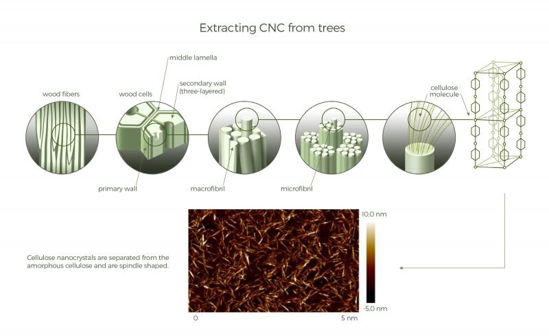 Получение наноцеллюлозы из деревьев. Источник: celluforce.com