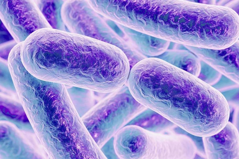 Бактерии-биосенсоры. Источник: earlham.ac.uk
