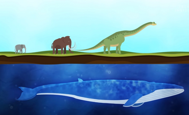 Мультфильм «How Whales Became The Largest Animals Ever». Источник: youtube.com