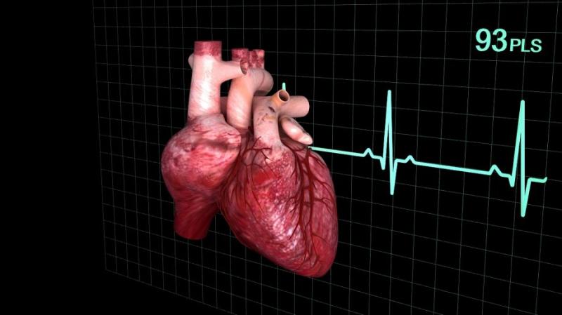 3D-модель сердца. Источник: cgstudio.com