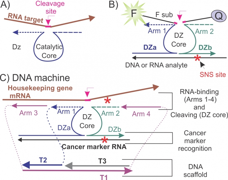 Конструкция разработанной ДНК-наномашины