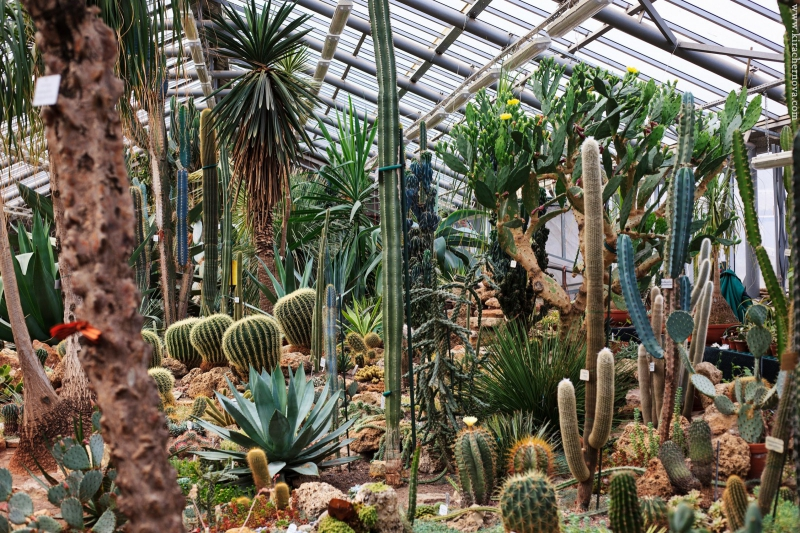The cacti and succulents of the garden's tropical route. Credit: botsad-spb.com