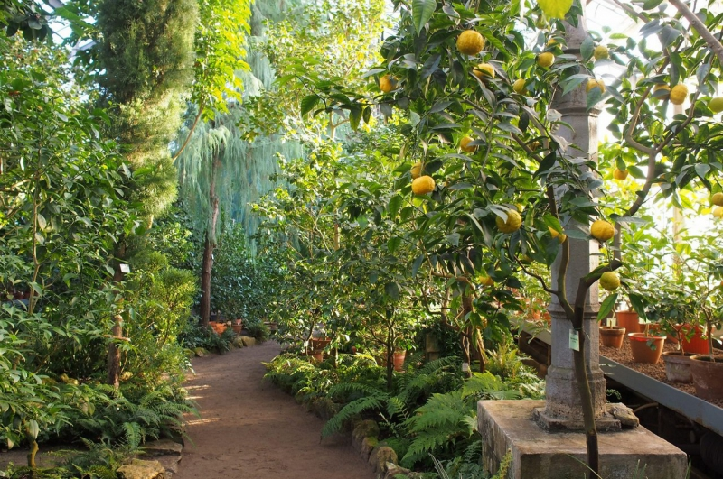 The Garden's subtropical route. Credit: botsad-spb.com
