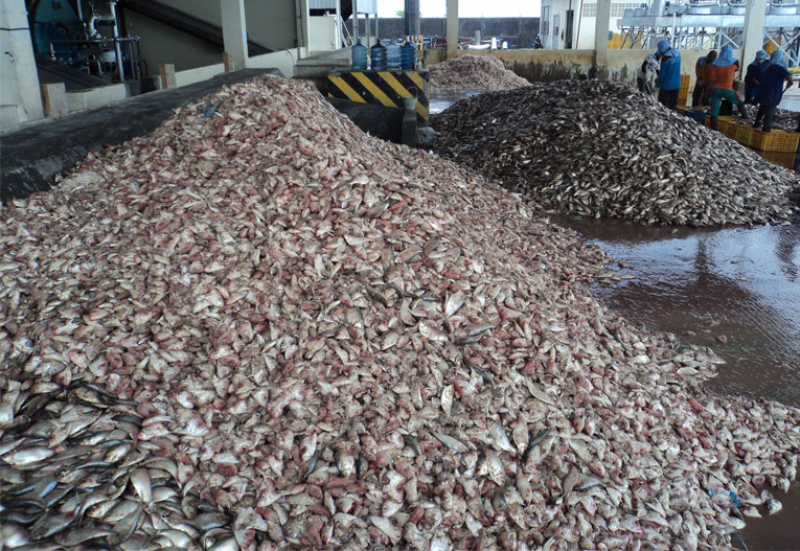 Рыбные отходы. Источник: fishmealmachine.com