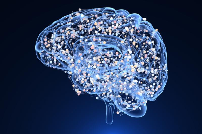 Мозг. Источник: shutterstock.com