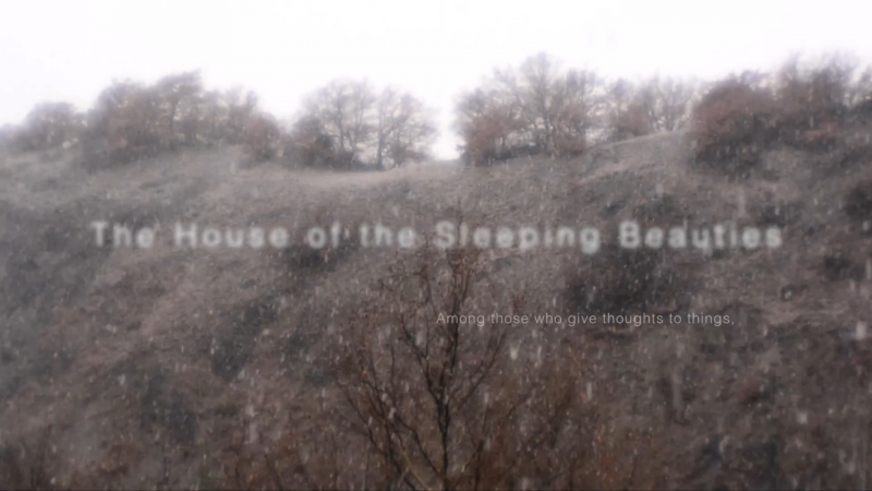 The House of the Sleeping Beauties by Laura Ige. Credit: cargocollective.com