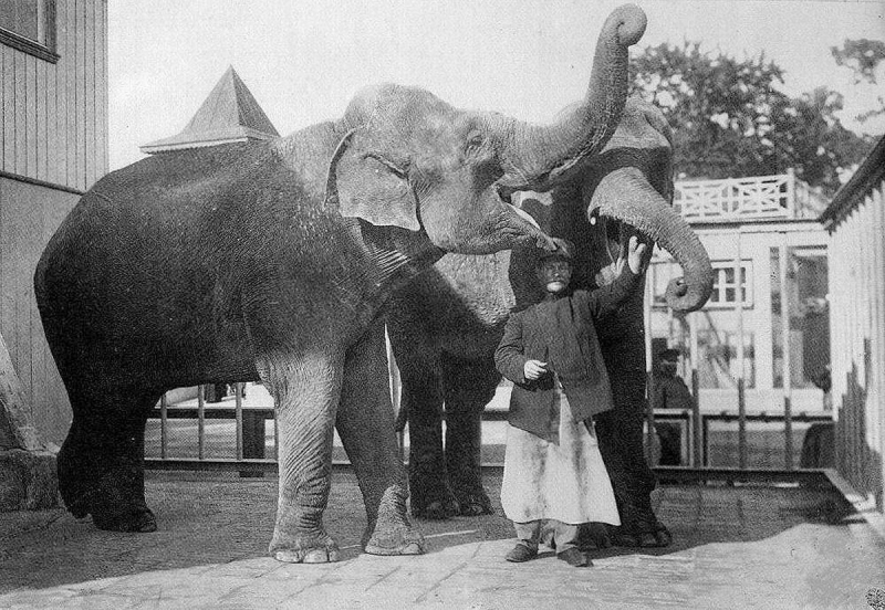 An elephant at St. Petersburg Zoo.
