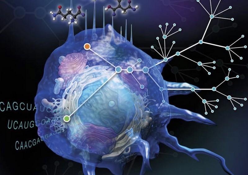 Открытие новых механизмов метаболизма поможет справиться с аутоиммунными заболеваниями