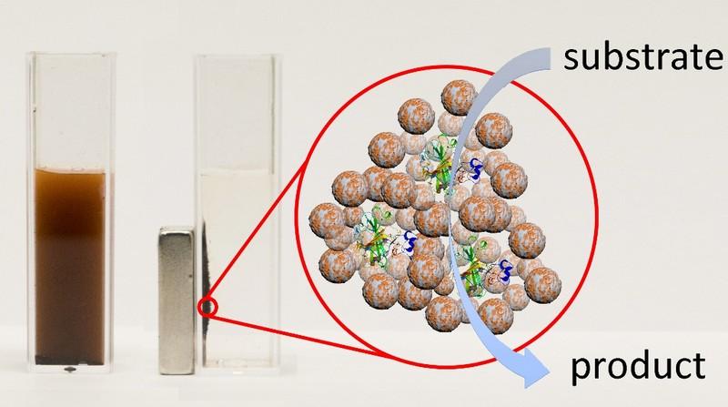 Ученые разработали новый класс агентов  для магнитной доставки лекарственных ферментов