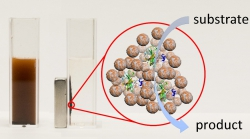 Magnetic Delivery of Therapeutic Enzymes Paves the Way for Targeted Thrombosis Treatment