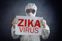 Scientists Develop Improved Model for Study of Zika Virus