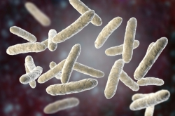 ITMO Scientists Determine Impact of Probiotics on Human Gut Microbiome