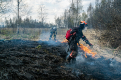 ITMO University Students on Mapping Wildfires for Greenpeace