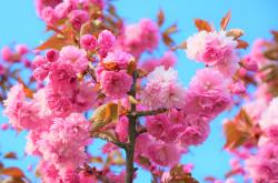 Nowruz: The Start of Spring